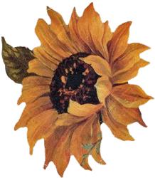 Sunflower Hotpad